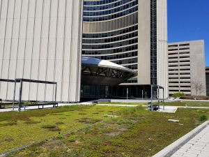 Green Roof at Toronto City Hall in May 2019